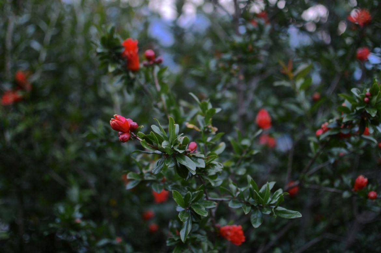 garden update june42