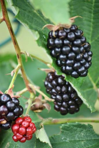 1berries