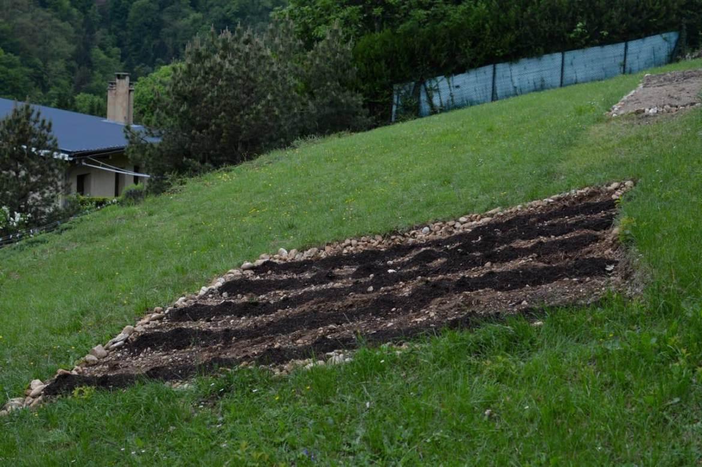 garden update may - 19