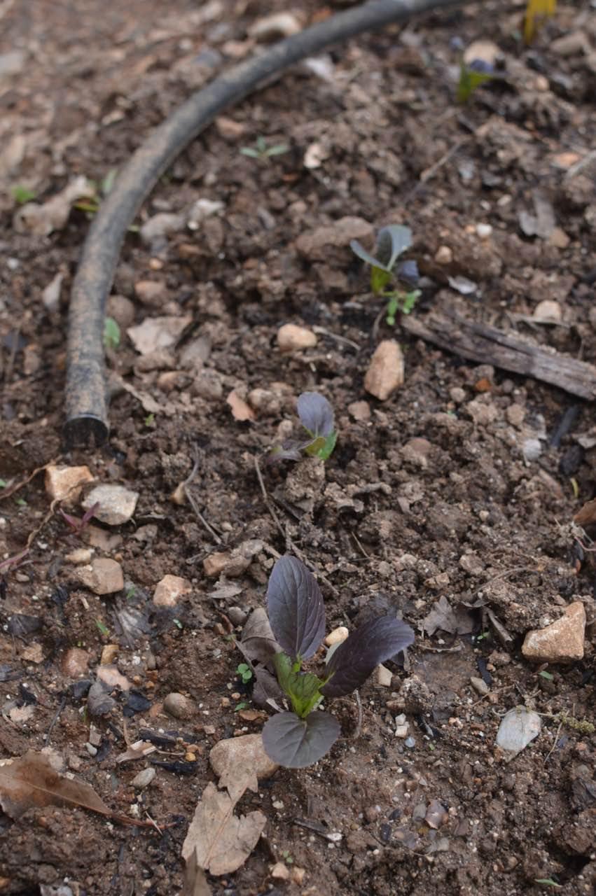 garden update may - 8