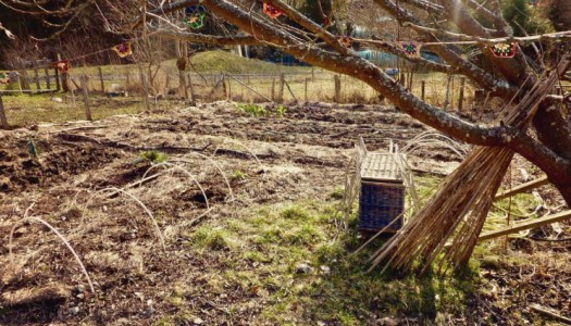 Garden update: wood chips, sowing, digging and drip hoses dilemma