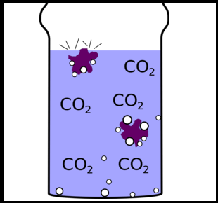 carbon dioxide experiment