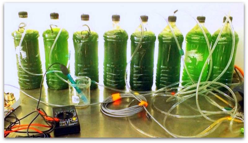 Make your own Biodiesel