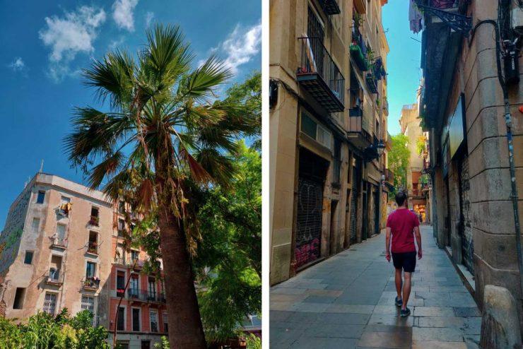 Palmuja, taloja ja katuja el Bornen alueella Barcelonassa