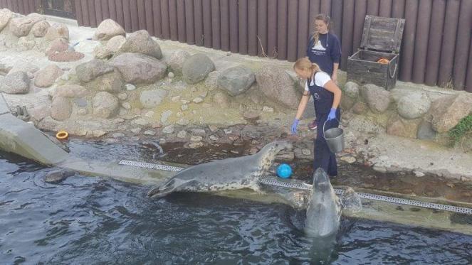 Fokarium wHelu. Nabrzegu znajdują się dwie opiekunki fok, jedna trzyma wiadro zrybami ikarmi foki. Jedna foka znajduje się nabrzegu druga foka jest zanurzona dopołowy wwodzie iopiera się obrzeg