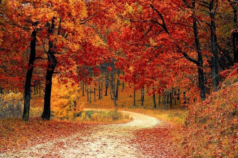 jesienny krajobraz, leśna droga w kolorach jesieni