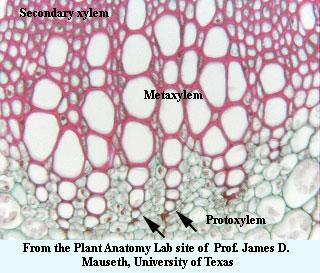 Palaeos Plants Glossary L O
