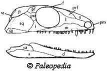 Palaeos Vertebrates Eureptilia Protorothyrididae