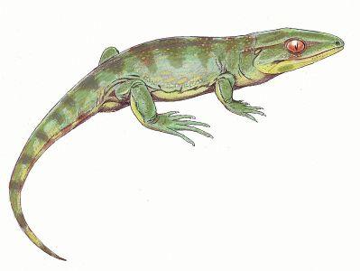 Gephyrostegus bohemicus