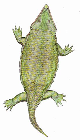 Laidleria gracilis - life reconstruction by Dmitry Bogdanov
