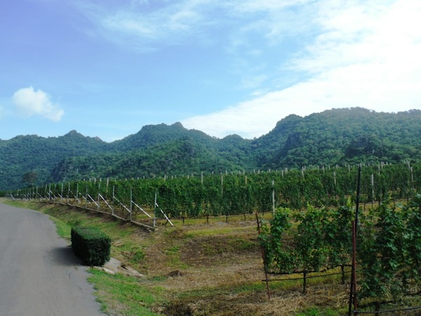 GranMonte Vineyards
