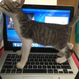 'A atenção é minha!'