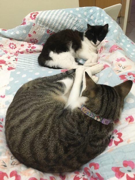 Irmãozinhos dormem