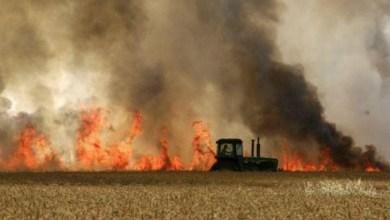صورة الإعلام العبري : البالونات الحارقة تسبب 7 حرائق بمستوطنات الغلاف