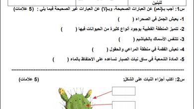 Photo of مجمع أوراق عمل وامتحانات نصف الفصل الثاني لكافة مواد الصف الثالث