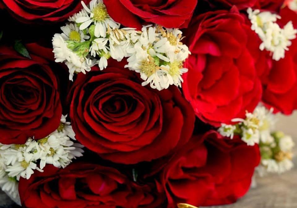 Sejarah Bunga Mawar dan Penyebarannya
