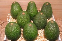 "Avocados ""Hass"" (1 Stück) - Bio - 1"