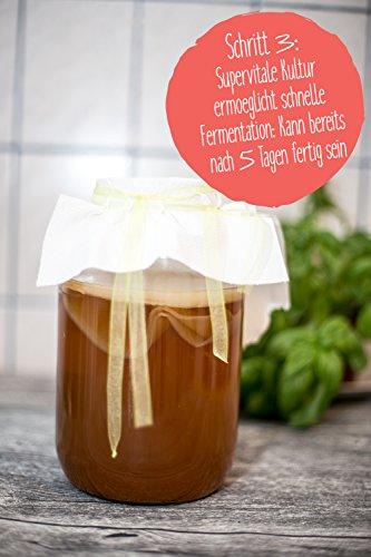 Original Kombucha Tee Pilz in Premium Größe Besonders Vitaler Scoby in Bio-Qualität für 1-5L Mit Kombucha Getränk Anleitung und Erfolgsgarantie von Fairment ® - 7
