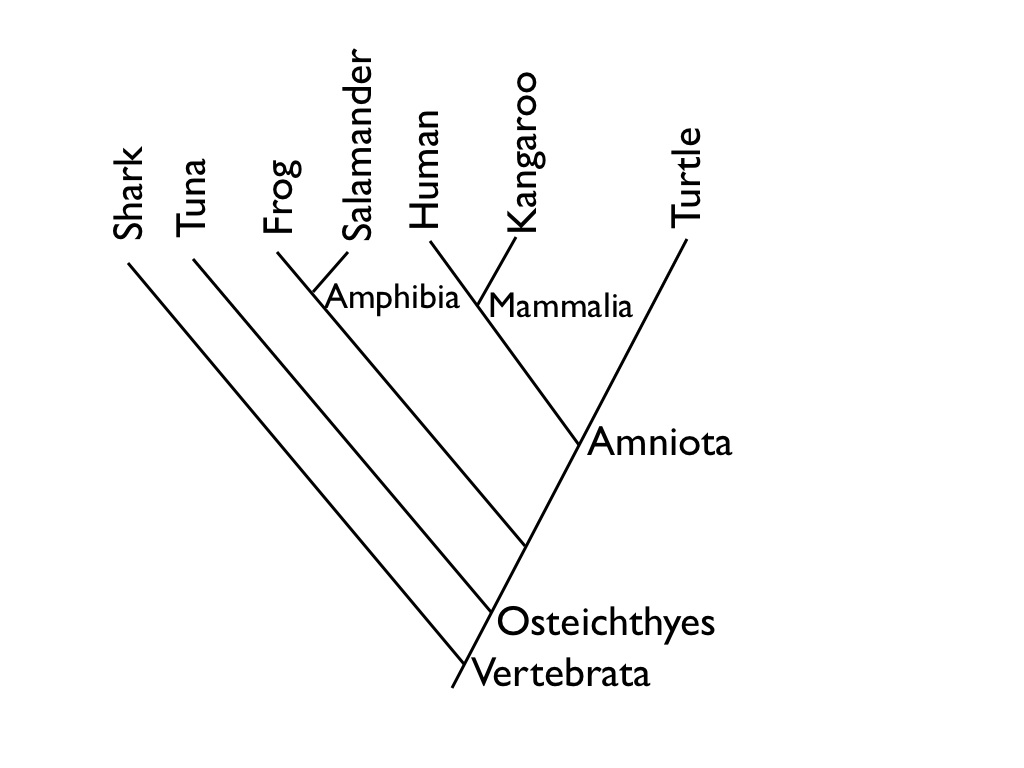 branching tree diagram worksheet warn winch wiring m8000 diagraming evolution or how to read a cladogram