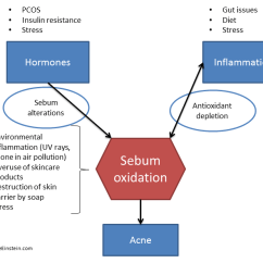 Hormonal Acne Diagram 3 Chambered Heart Thinking Beyond Hormones A Guest Post From My Most Trusted Expert Seppo