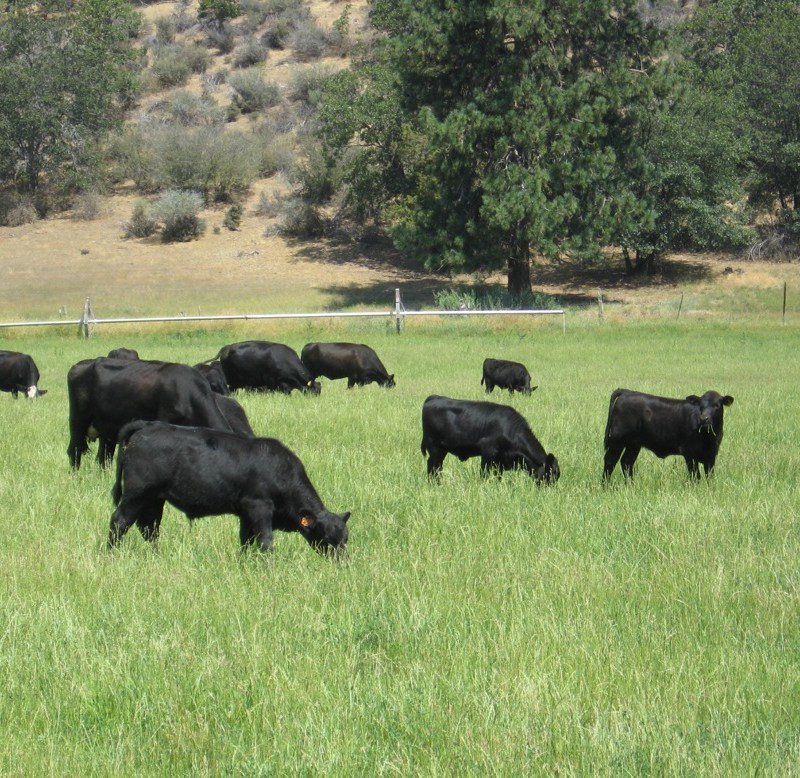 Panorama Meats - Paleo Approved, Grassfed beef from Panorama Meats at Whole Foods - Our USDA Certified Organic, 100% grass-fed and grass-finished beef comes from cattle raised by U.S family ranchers on pastures and hillsides throughout the West and Midwest. #paleoapproved #paleo #certifiedpaleo