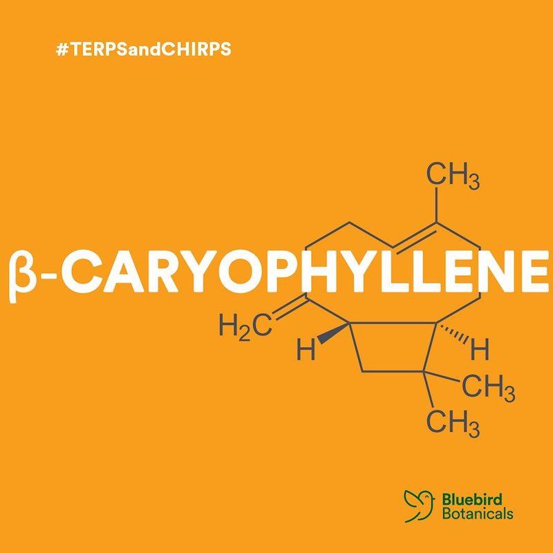 Terpene- Beta-Caryophyllene - Bluebird Botanicals - Certified Paleo, KETO Certified by the Paleo Foundation