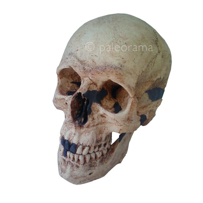 replica craneo homo sapiens cromanon cromagnon