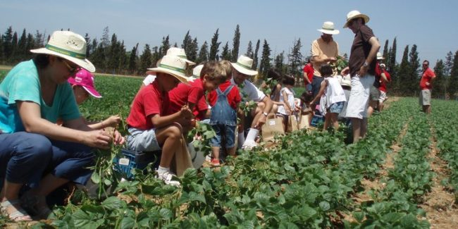 cultivos disfruta y verdura