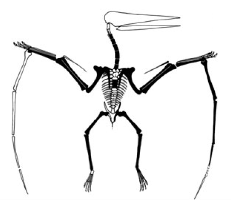 Wenupteryx uzi, a Jurassic pterosaur from Patagonia