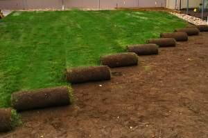 Great sod installation