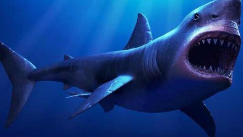 Ikan Hiu Megalodon