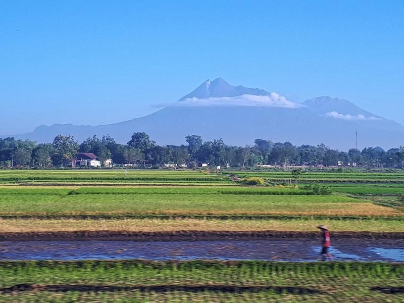 java indonesia rice field