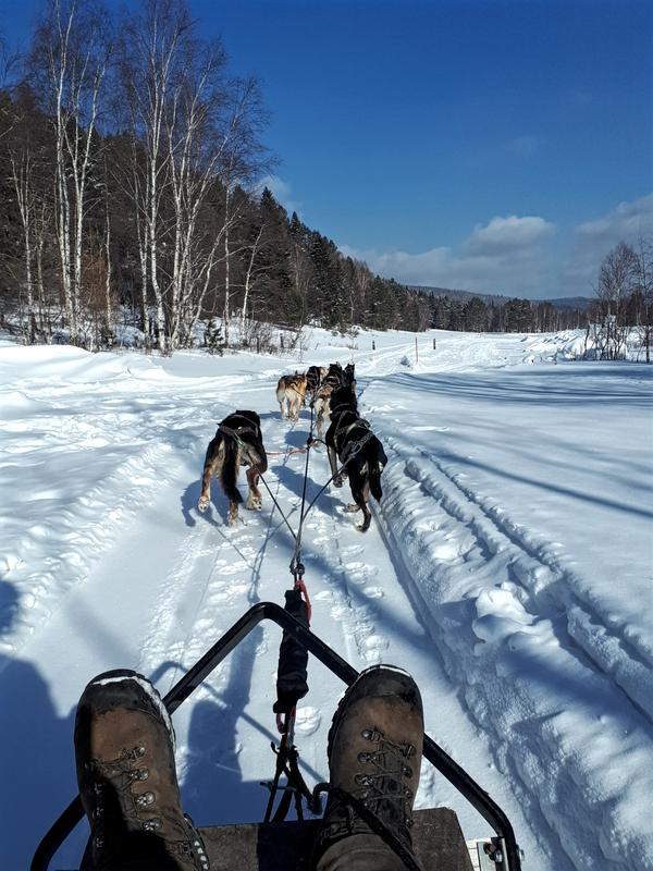 dog sledding lake baikal winter trip report