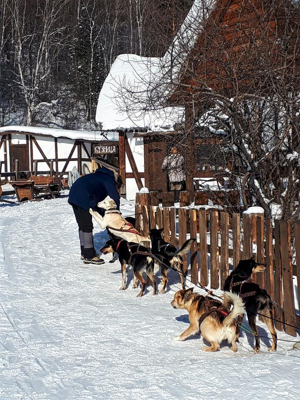 listvyanka dog sledding