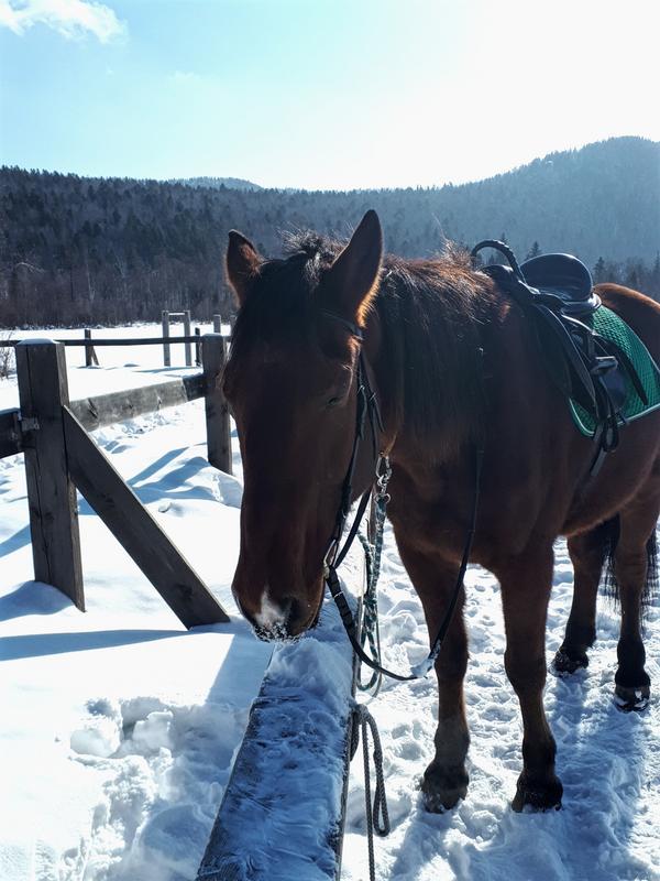 listvyanka horse