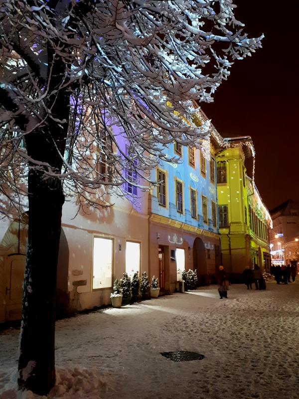 sibiu snowy tree