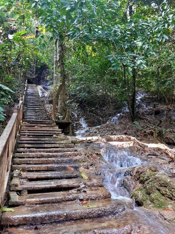 steps jungle