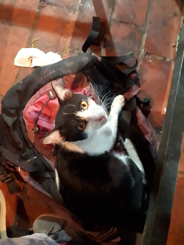 cat rucksack