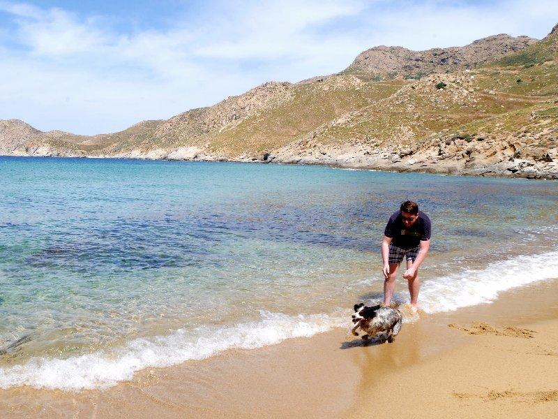 kalo ampeli beach dog koen
