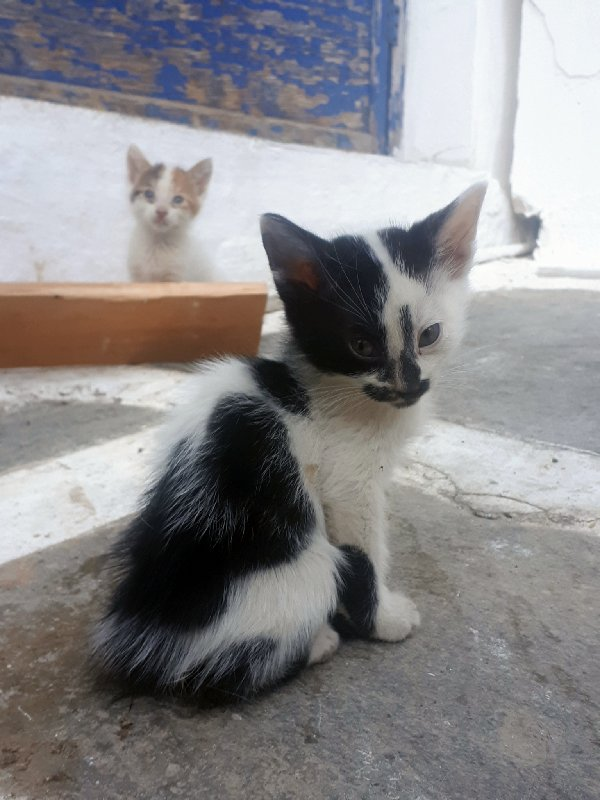 greek cat kitten greece