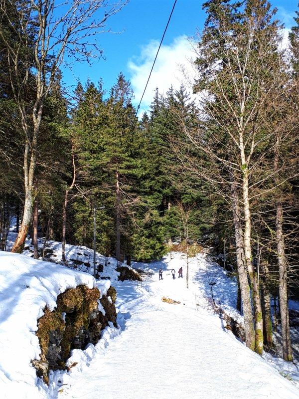 mount fløyen bergen forest trip report