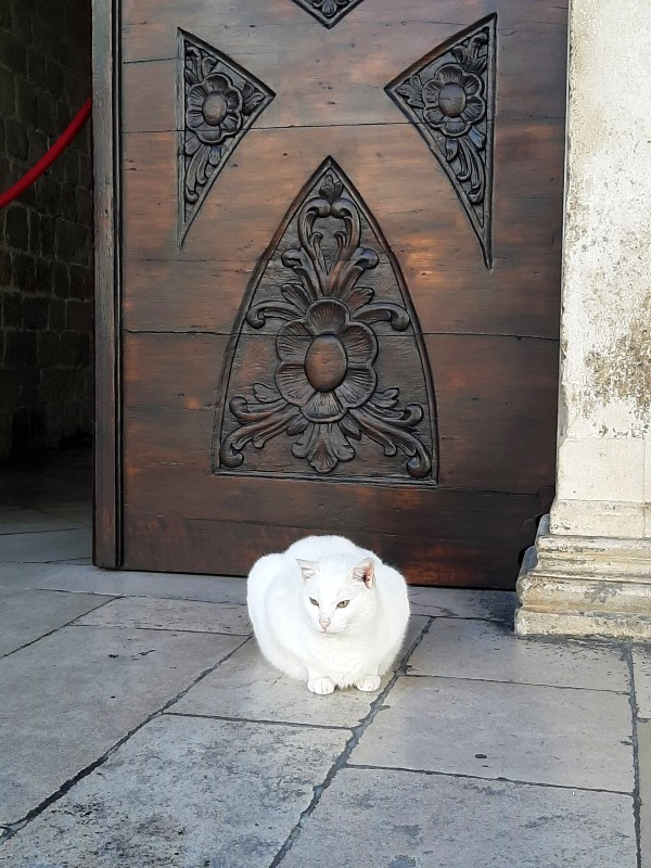 white cat rectoral palace