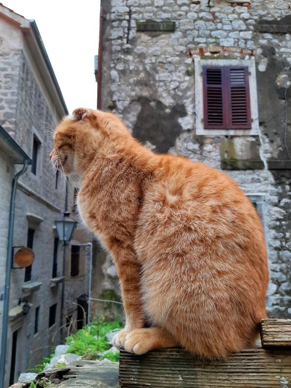cat kotor