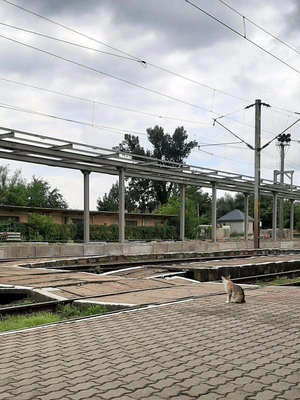 cat train station