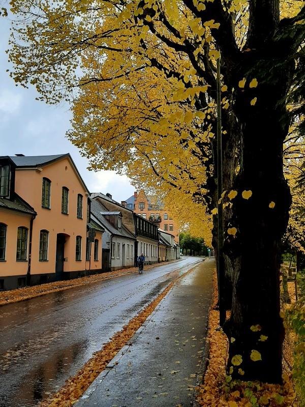 lund street autumn