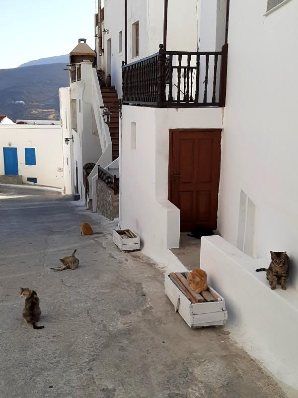 astypalea cats
