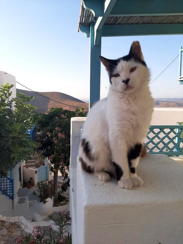 cat astypalaia