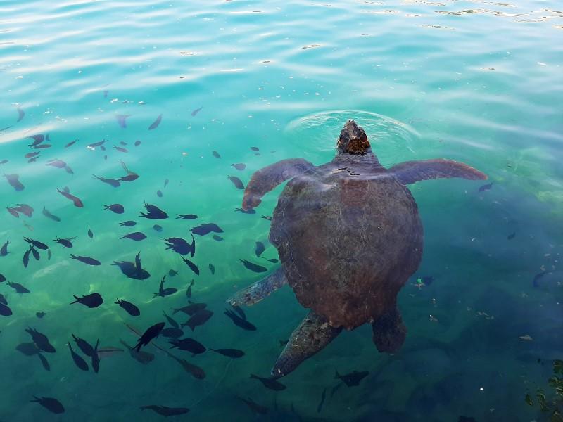 turtle kastellorizo