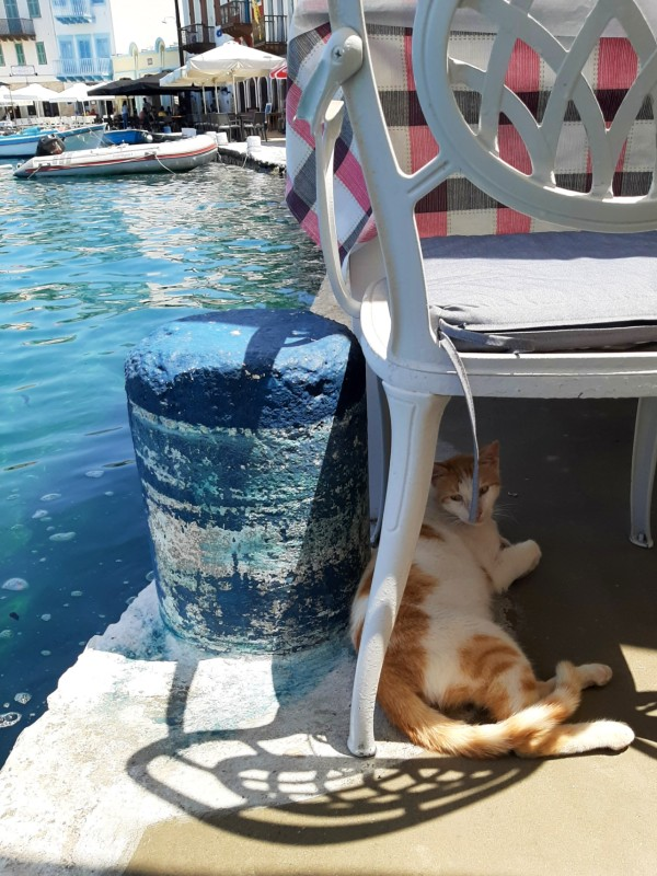 cat greece