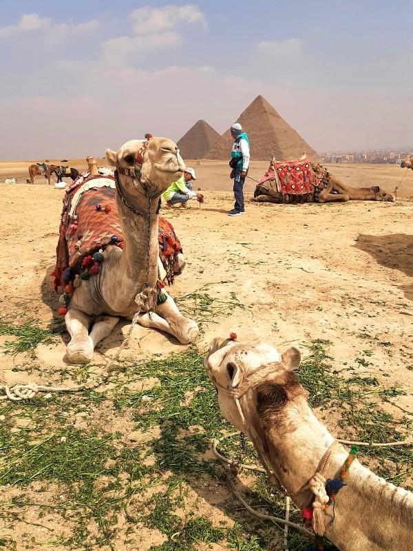 camel giza pyramids egypt trip report